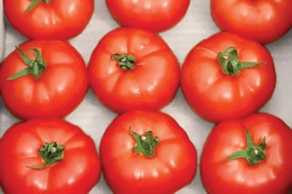 berberena-paradajz
