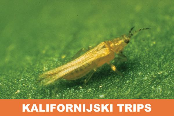 kalifornijski-trips