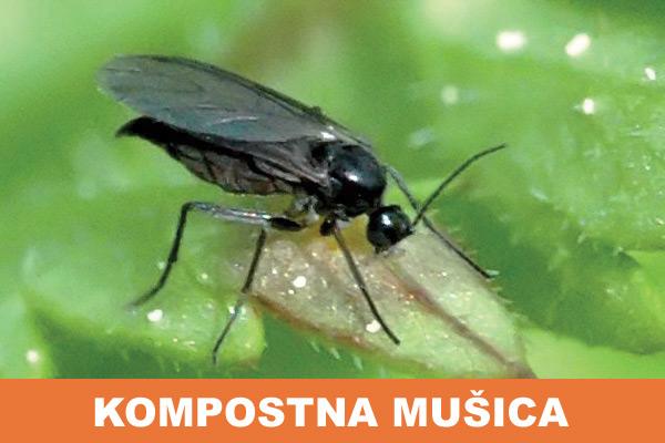 kompostna-musica