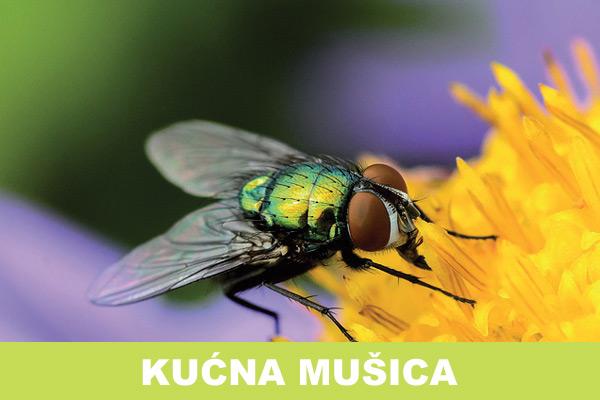 kucna-musica