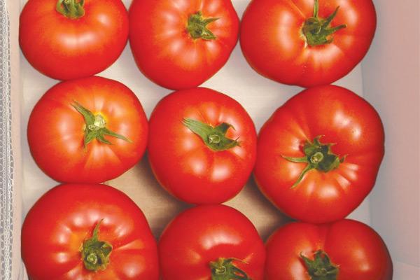 mondial-paradajz