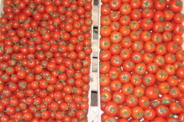 sakura-paradajz