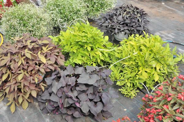strukturne-biljke