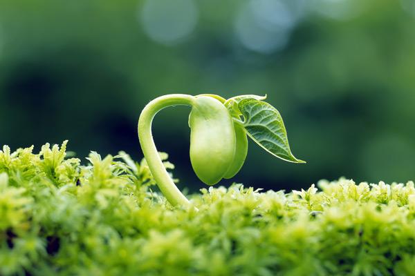 tretiranje-semena